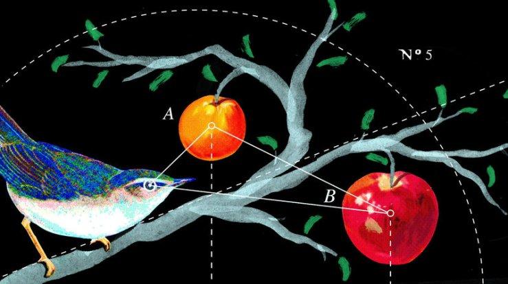 bird_diagram_final_wide-f57ad53cb648cd6a830907907811e189be432798-s800-c85